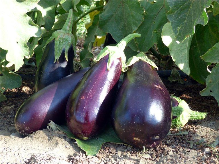 Eggplant 1kg