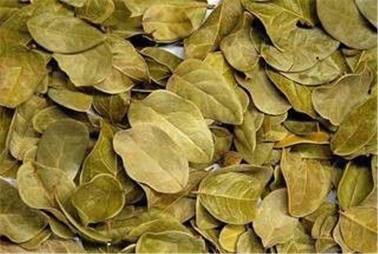Boldo hojas, bandeja 70 gramos, 1 ud