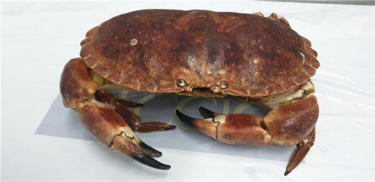 Buey de Mar Fresco 1kg (ref. 020004)