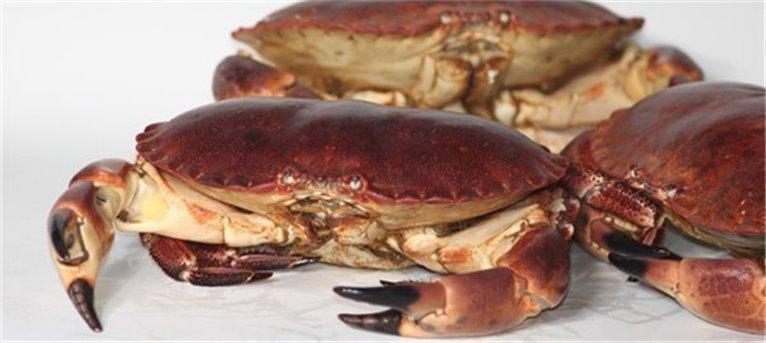 Buey de Mar (€/Kilo), 1 kg