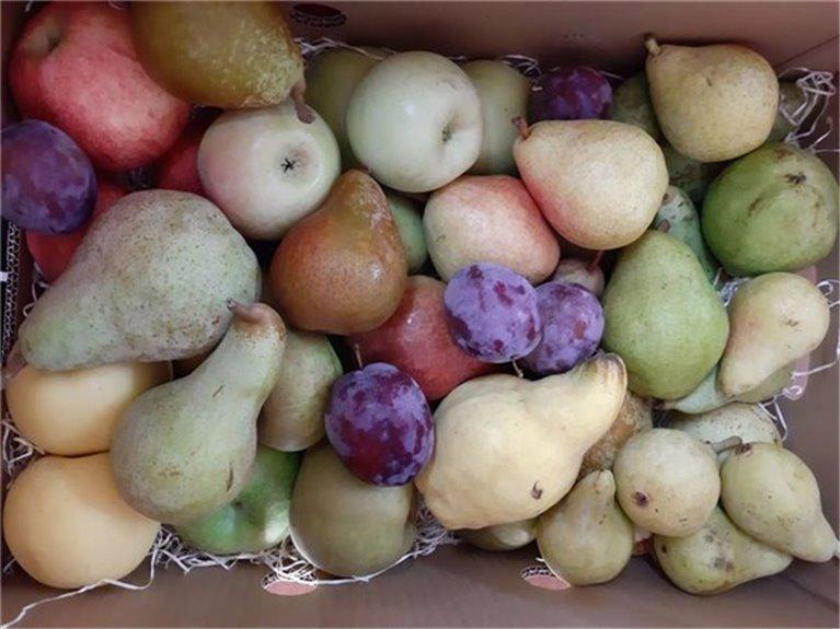 Caja Toda Nuestra Fruta