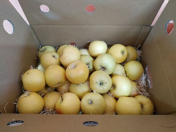 Caja Todo Manzanas Amarillas MINI 3,5 kilos