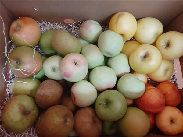 Caja Todo Manzanas MINI