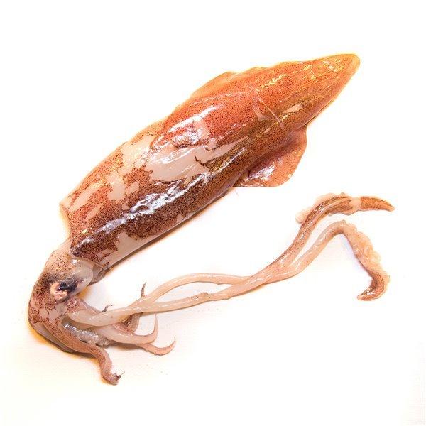 Calamar / Calamar europeo / Chipirón