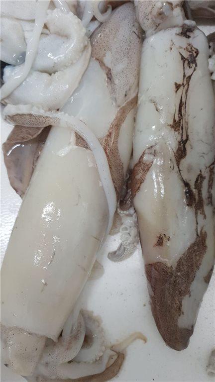 Calamar de Playa Congelado  1kg (ref. 090003, 090110)