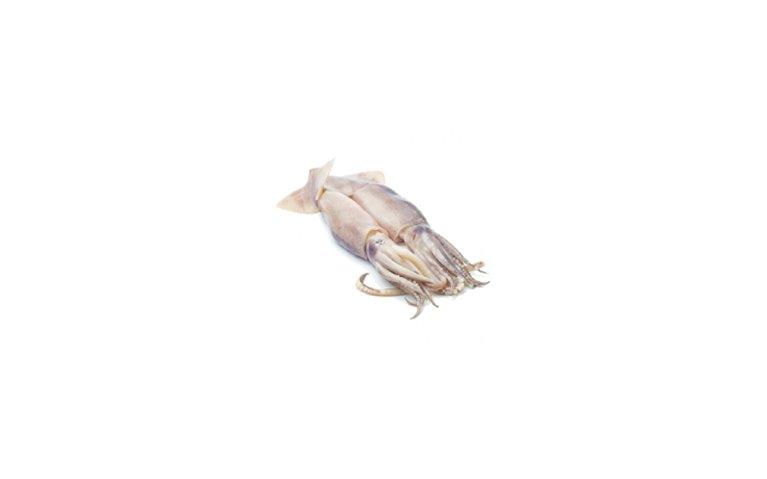 Calamar (fresco)