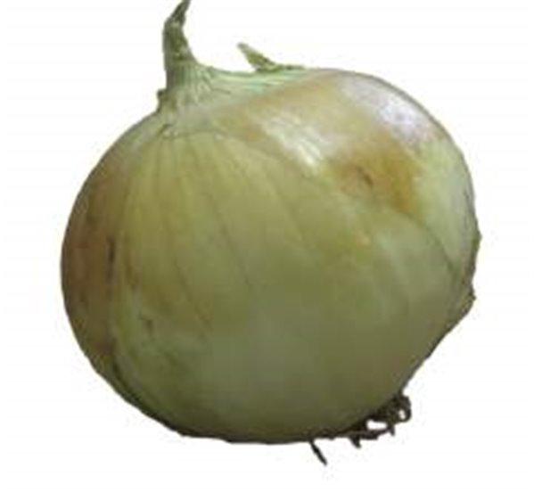 Cebollas secas