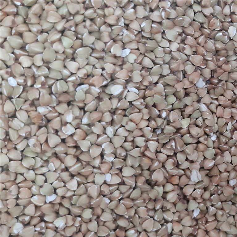 Cereal trigo sarraceno en grano