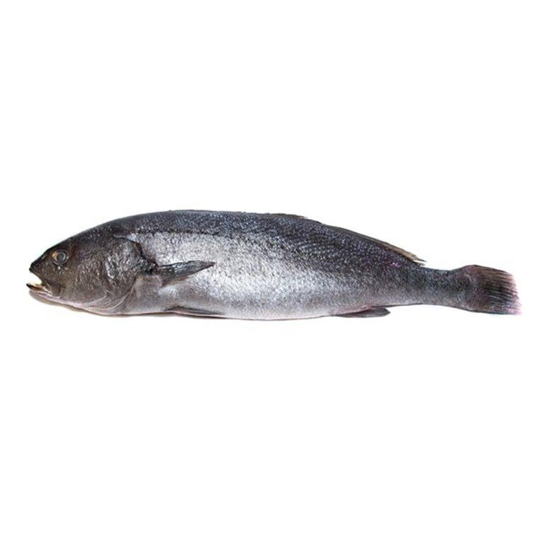 Corvina 1.2 kg, 1 ud