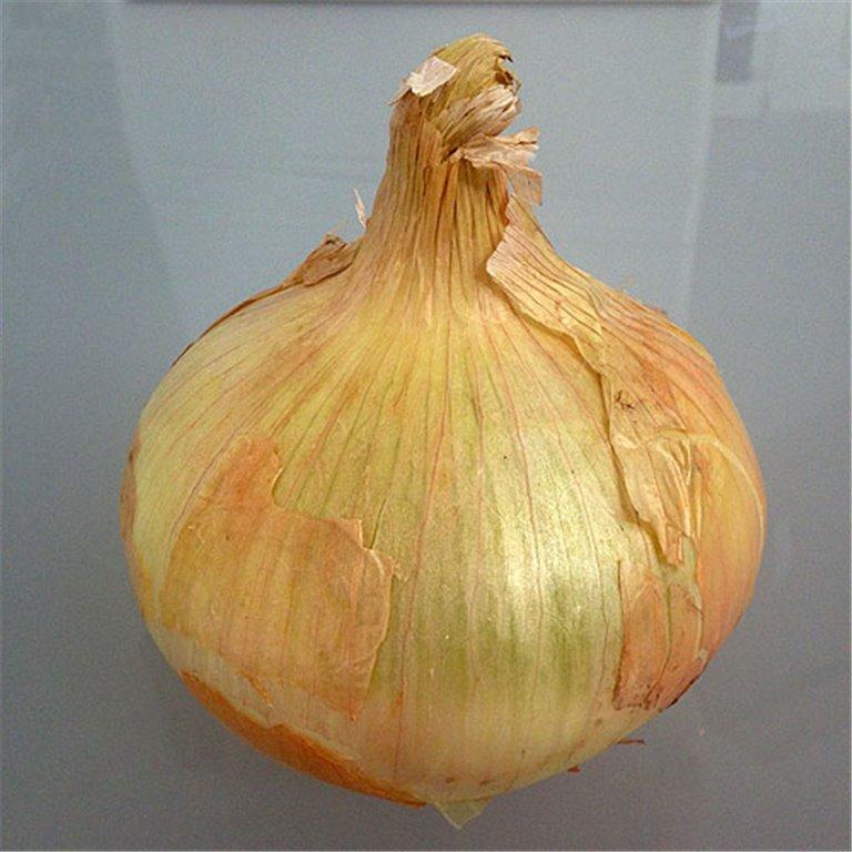Cebolla de Villafranca. 4Kg. Ecológica, 1 ud