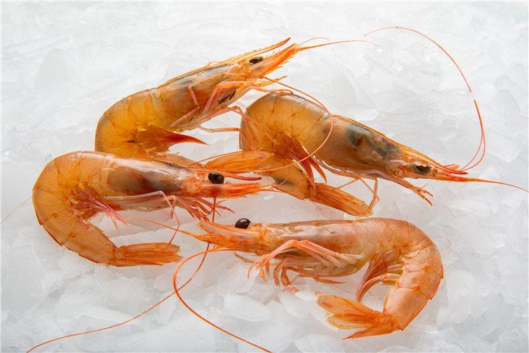 White Shrimp of the Coast