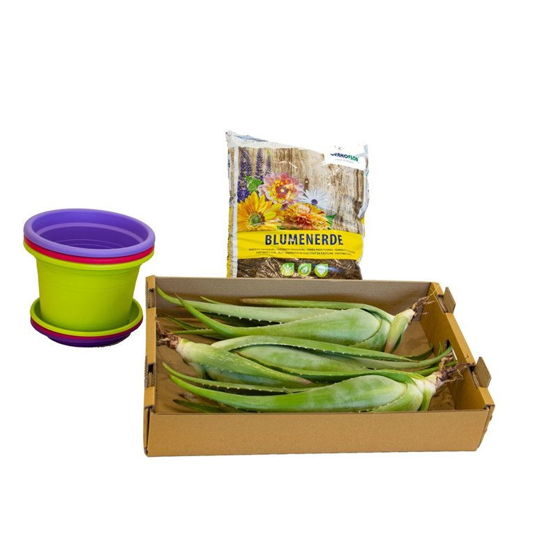 Kit de cultivo de Aloe vera