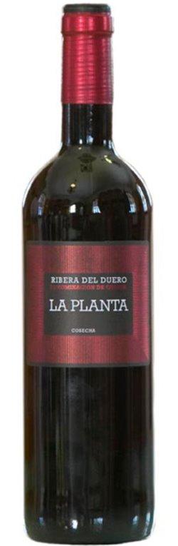 La Planta 2017, 1 ud