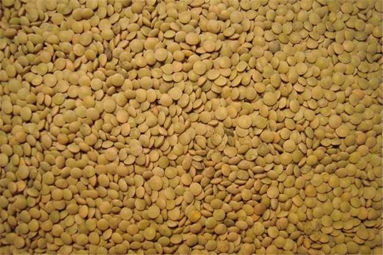 Lentils of the sagra (500gr)