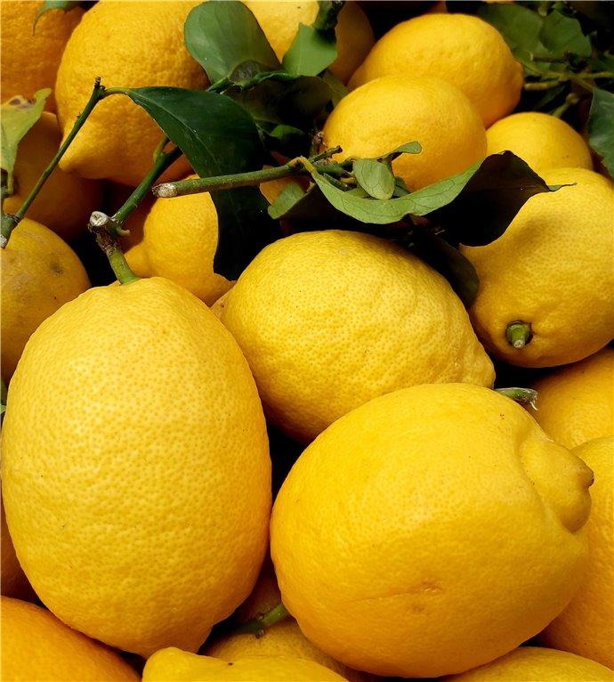 Limones (1900-2000gr)