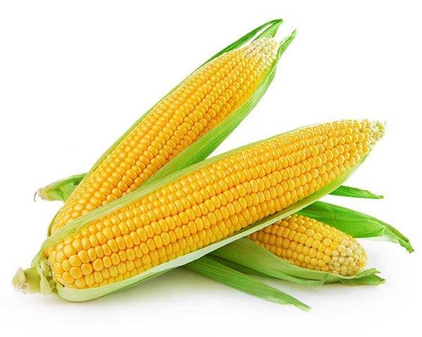 Mazorca de maíz natural