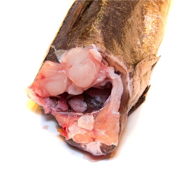 Merluza / Merluza Europea / Pescadilla