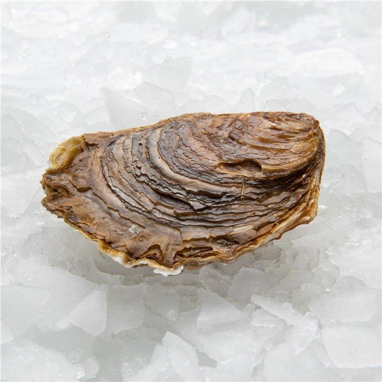"Galician oyster ""Superking"""