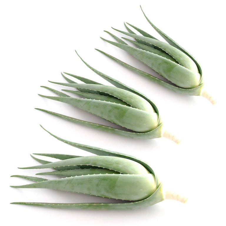 Pack de 3 hijuelos de Aloe vera ecológico