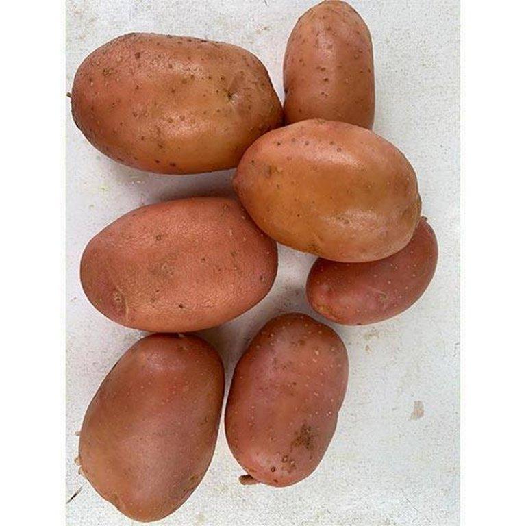 New Red Potato Bartina Organic - 500 gr