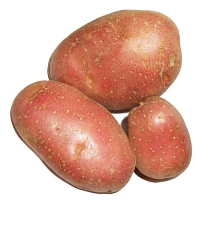 Patata Roja Ecológica