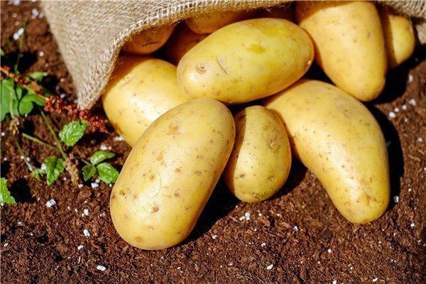 Patatas de la Virgen del Rocío de Sanlúcar de Barrameda - caja 10 kg (variedad agria)