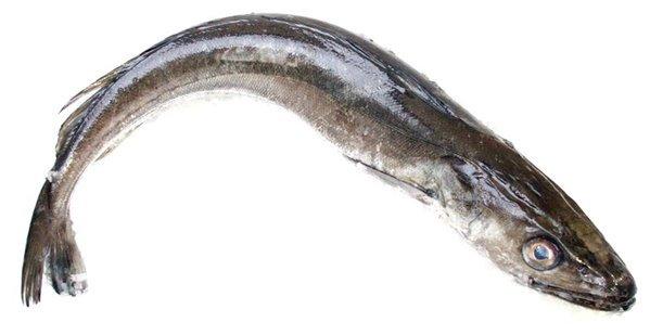 Pescadilla de pincho