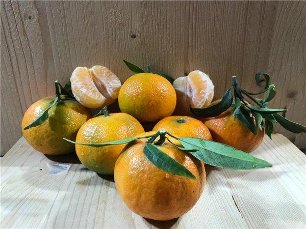 PROMO: Caja 15kg de clementinas Oronula + 5kg GRATIS