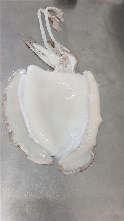 Sepia Congelada 300-400 gr (2 kg) (ref. 090030)