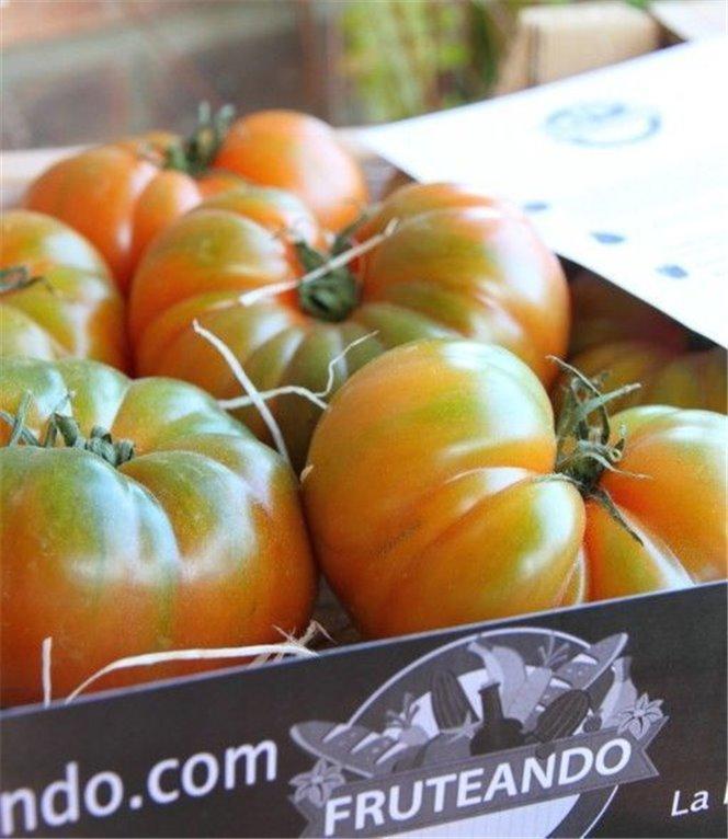 Tomate Delizia