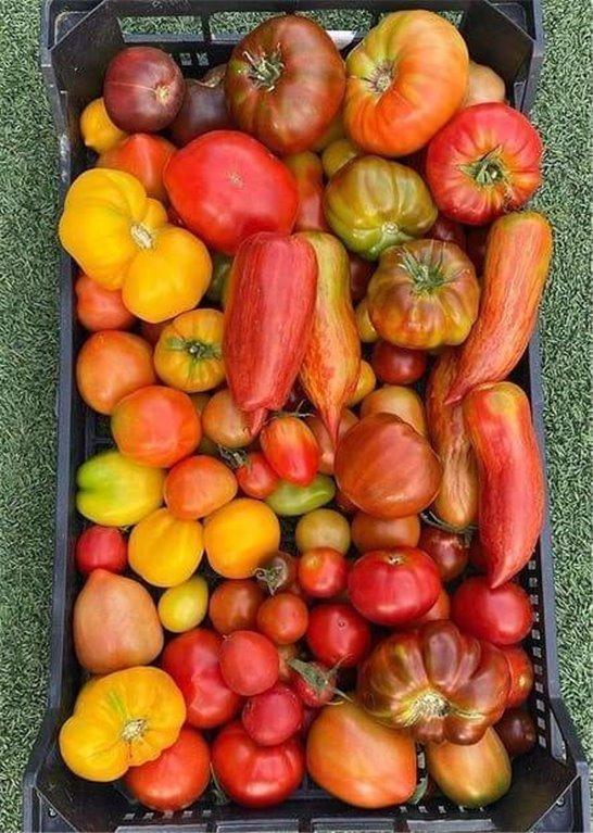 Organic Ripe Tomato - 500g