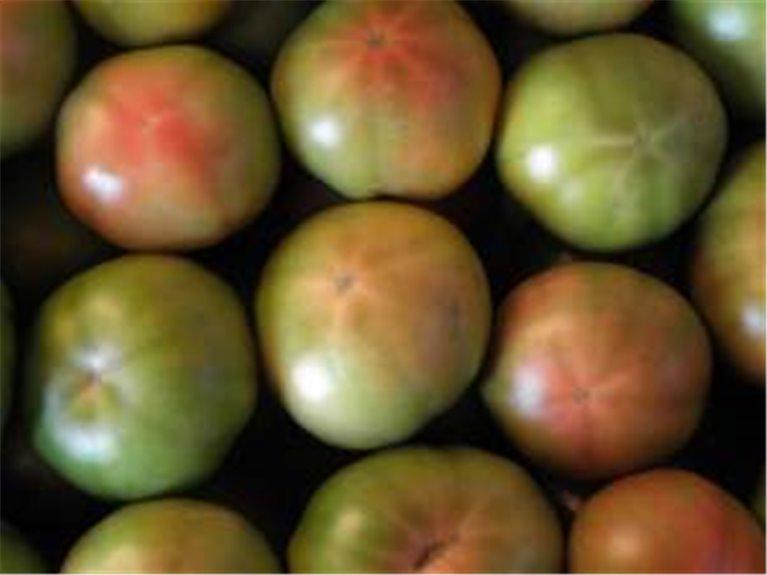 Tomates, 1 kg