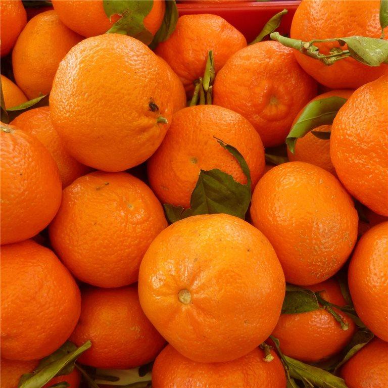 ir a Naranjas para zumo y mandarinas ecológicas tradicionales naturales