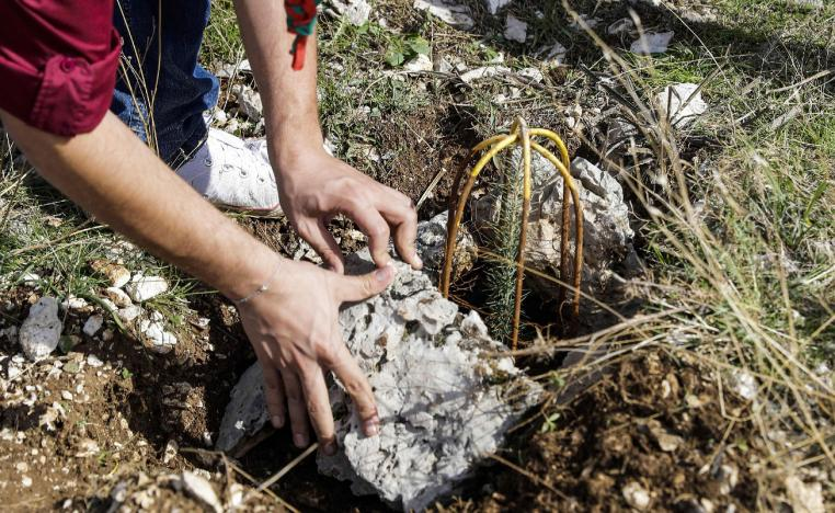 "An activist from Lebanese NGO Jouzour Loubnan (""Roots of Lebanon"") lays out rocks next to a newly-planted young cedar."