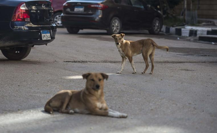 Watch out for stray dogs in Cairo