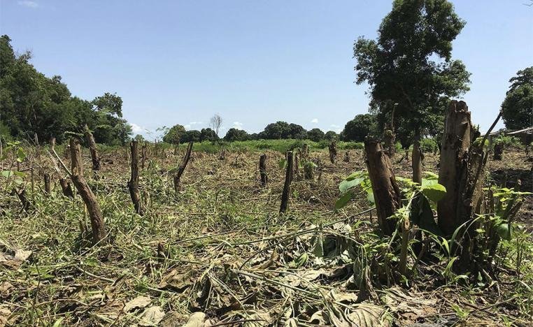 South Sudan grapples with the devastating effects of climate change, which is exacerbated by the deforestation