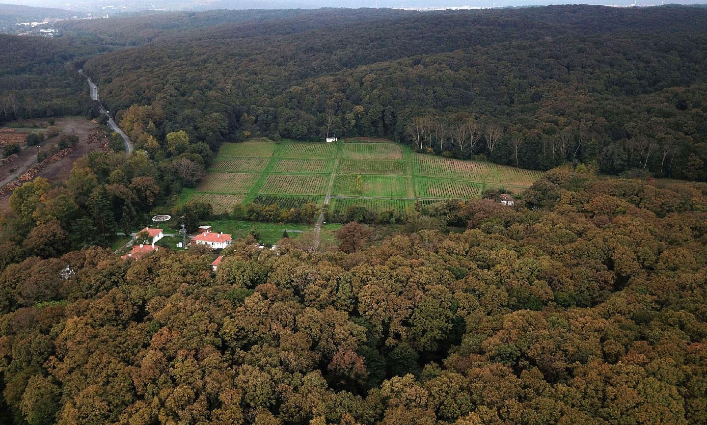 An aerial view of the Belgrade Forest in Istanbul.