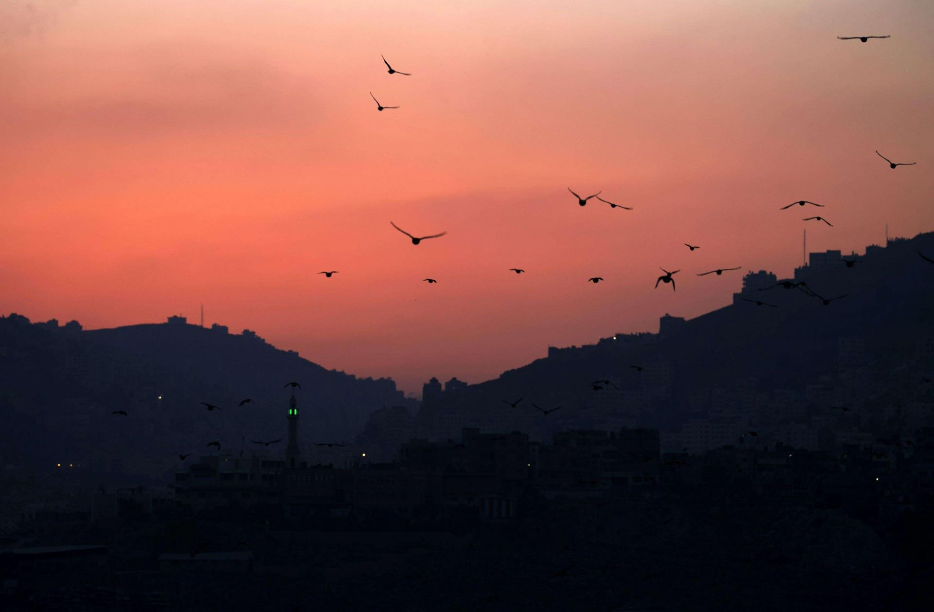 Around 500 million birds migrate through Israel and the Palestinian territories each year