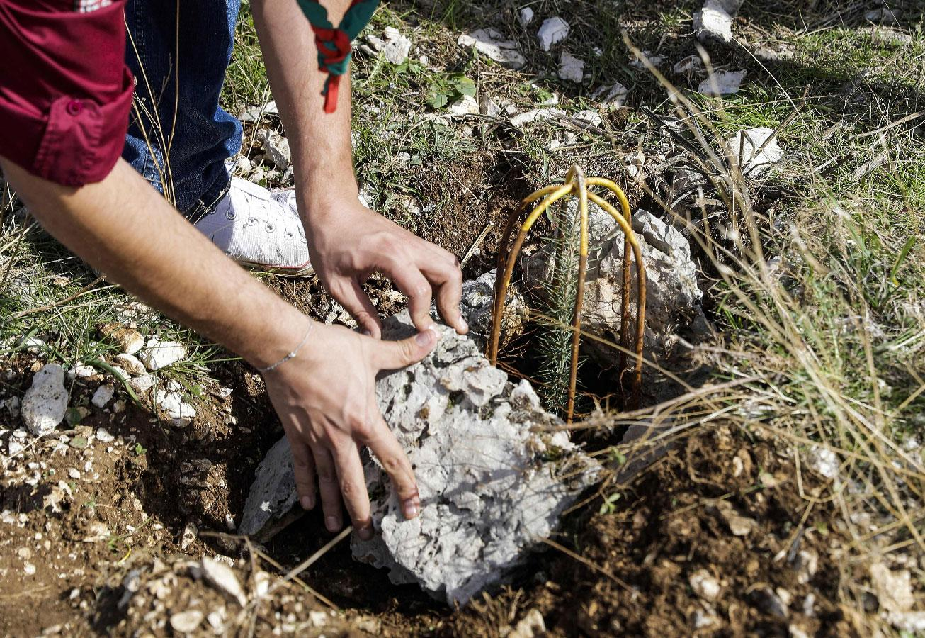 """An activist from Lebanese NGO Jouzour Loubnan (""""Roots of Lebanon"""") lays out rocks next to a newly-planted young cedar."""