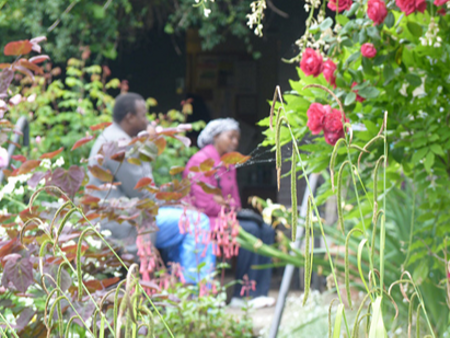 A man and woman sit in a garden surrounded by brightly-coloured flowers