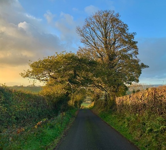 A country lane with two trees set against a blue-gold sky