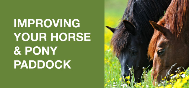 Improving your horse and pony paddock