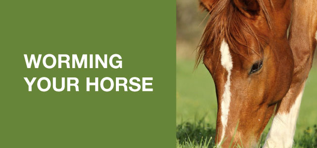 Worming Your Horse