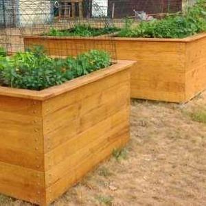 Les légumes poussent, le gazon sèche...