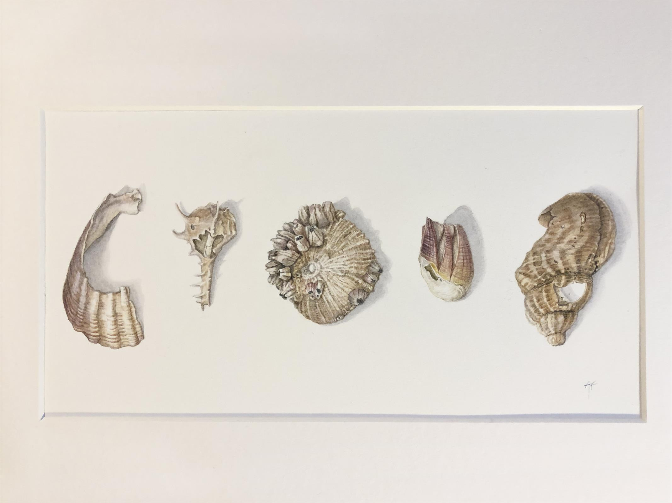 Broken Shells  -Beauty in Imperfection