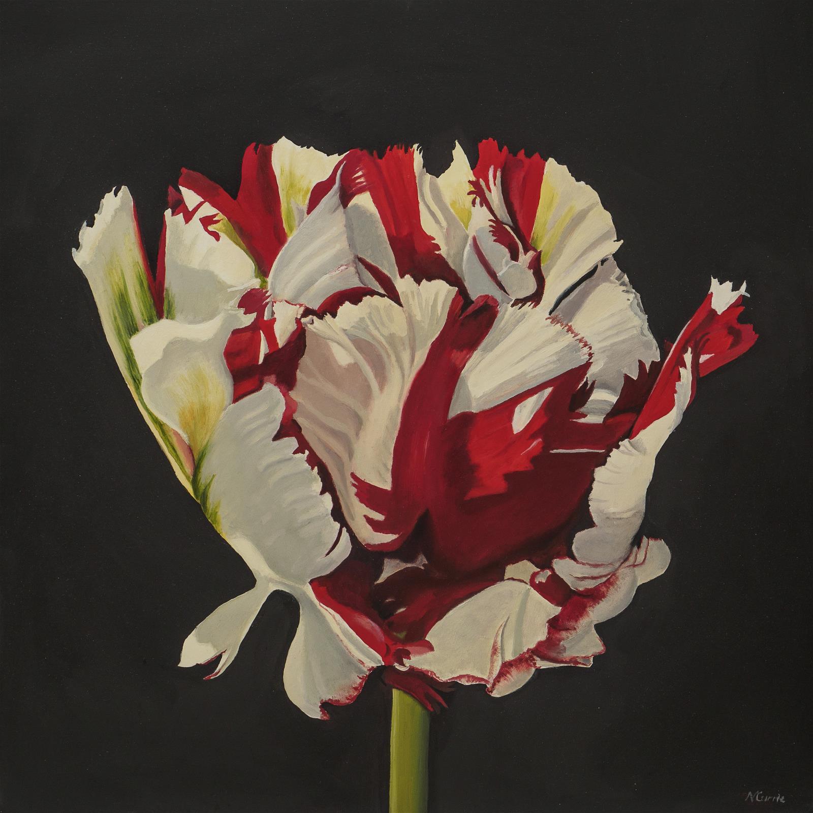 Tulipa Estella Rijnweld
