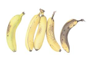 Ripening bananas