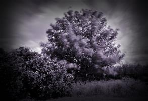 Timeless Tree