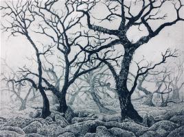 Dartmoor Woodland