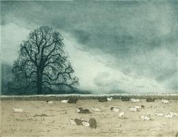 Sheep, Wimpole